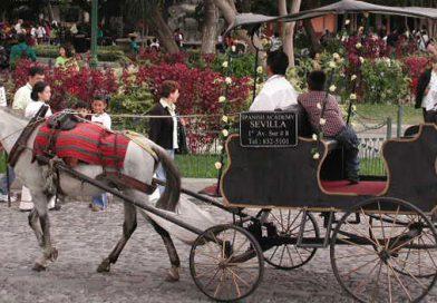 Antigua revoca permisos de circulación a carruajes jalados por caballos