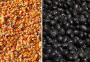 """El Salvador prevé cosecha """"récord"""" de granos básicos al cierre de 2017"""