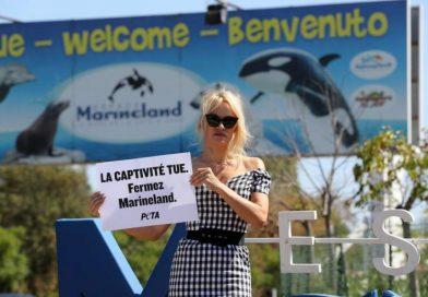 Pamela Anderson protesta contra cautiverio de animales en Francia