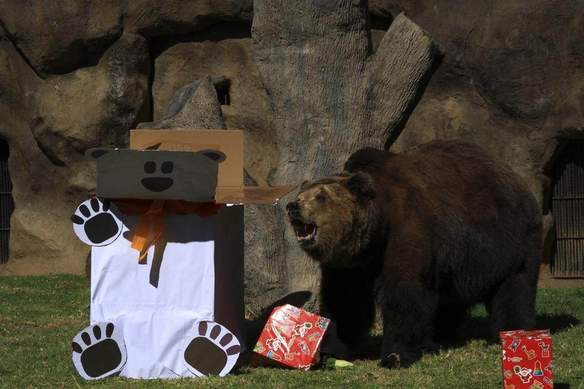 La Navidad llega al Zoológico La Aurora