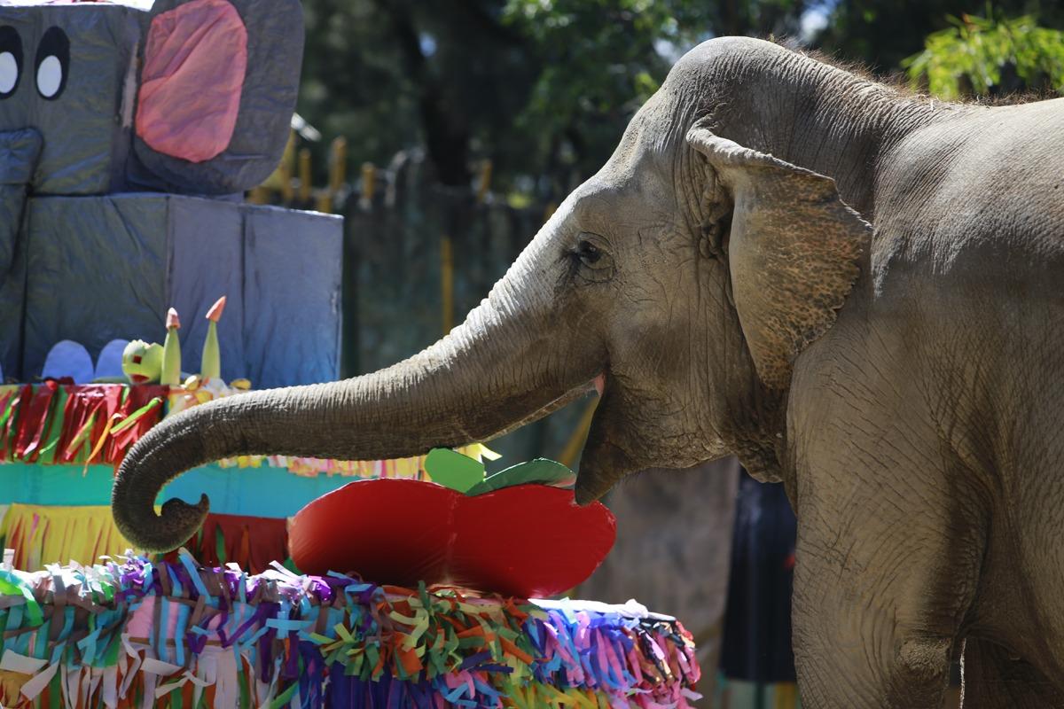 Trompita celebra sus 57 años