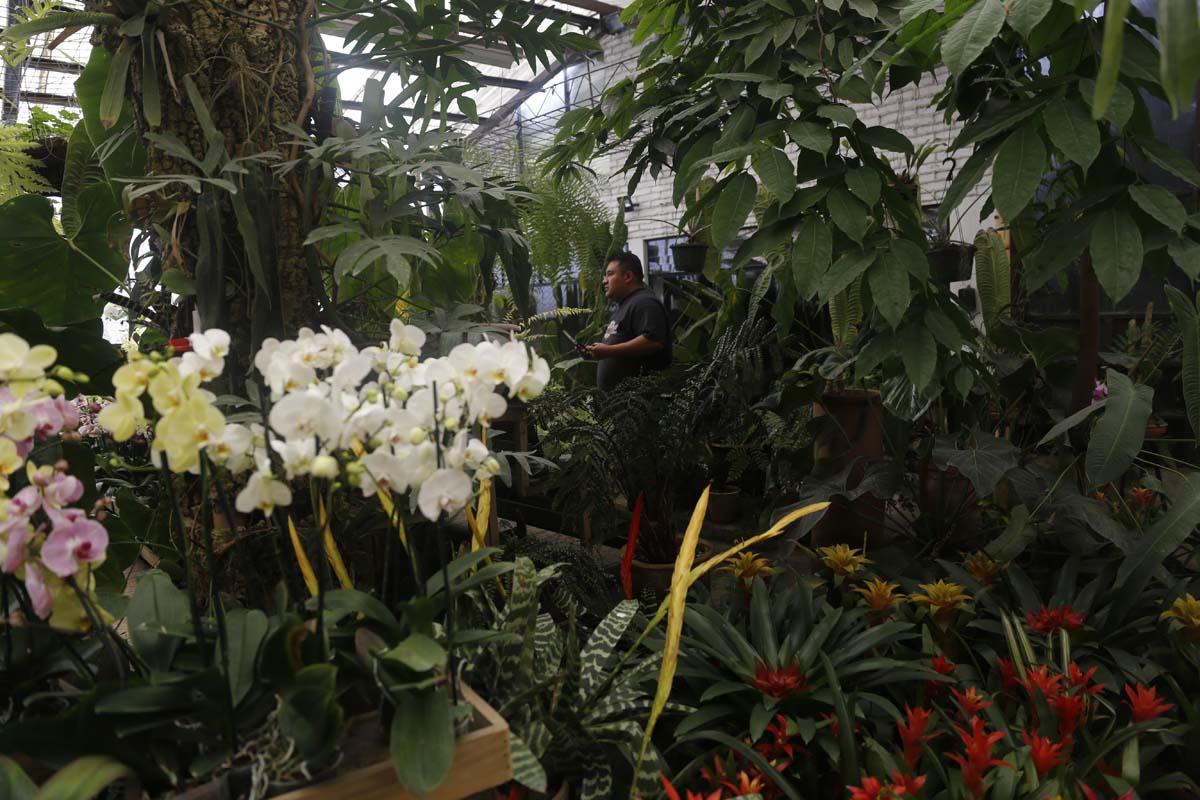 XLIV Exposición Nacional de Orquídeas