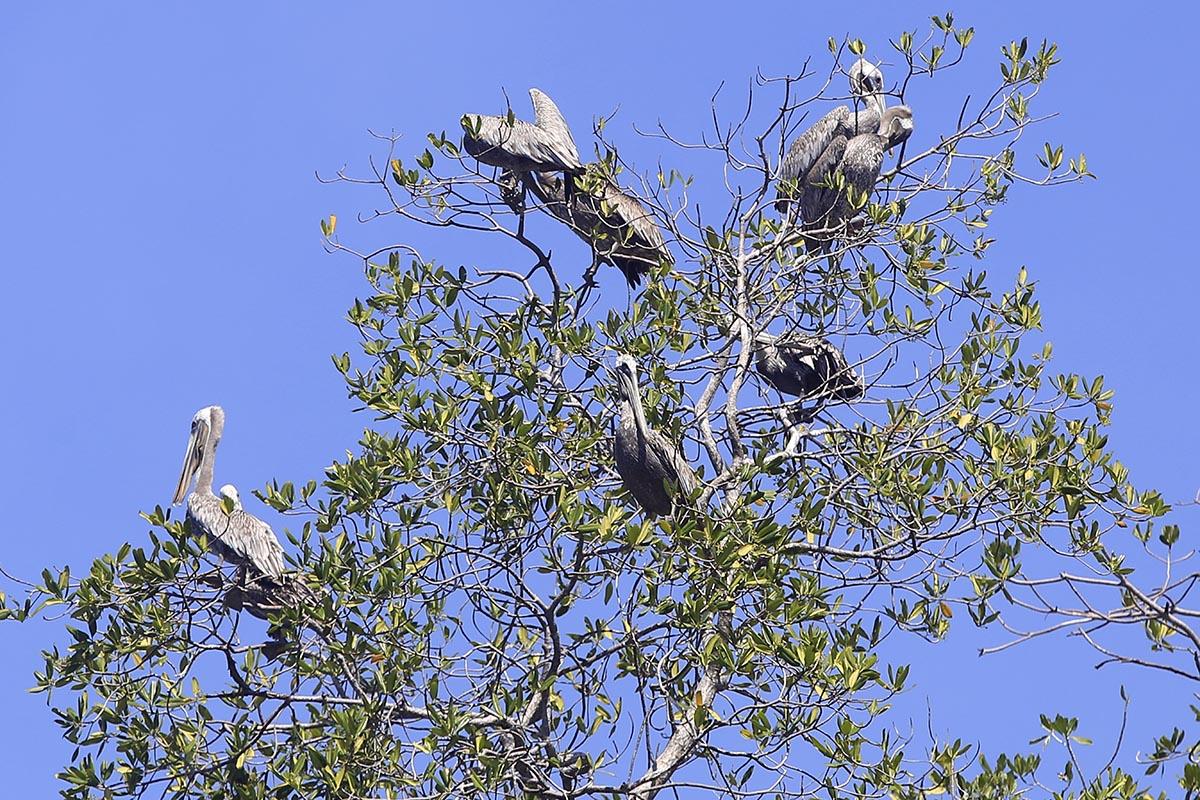 Manglares, un ecosistema para conservar