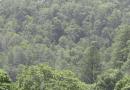 Incendios en Honduras han arrasado 60 mil hectáreas de bosque