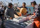 Piden regular la actividad pesquera