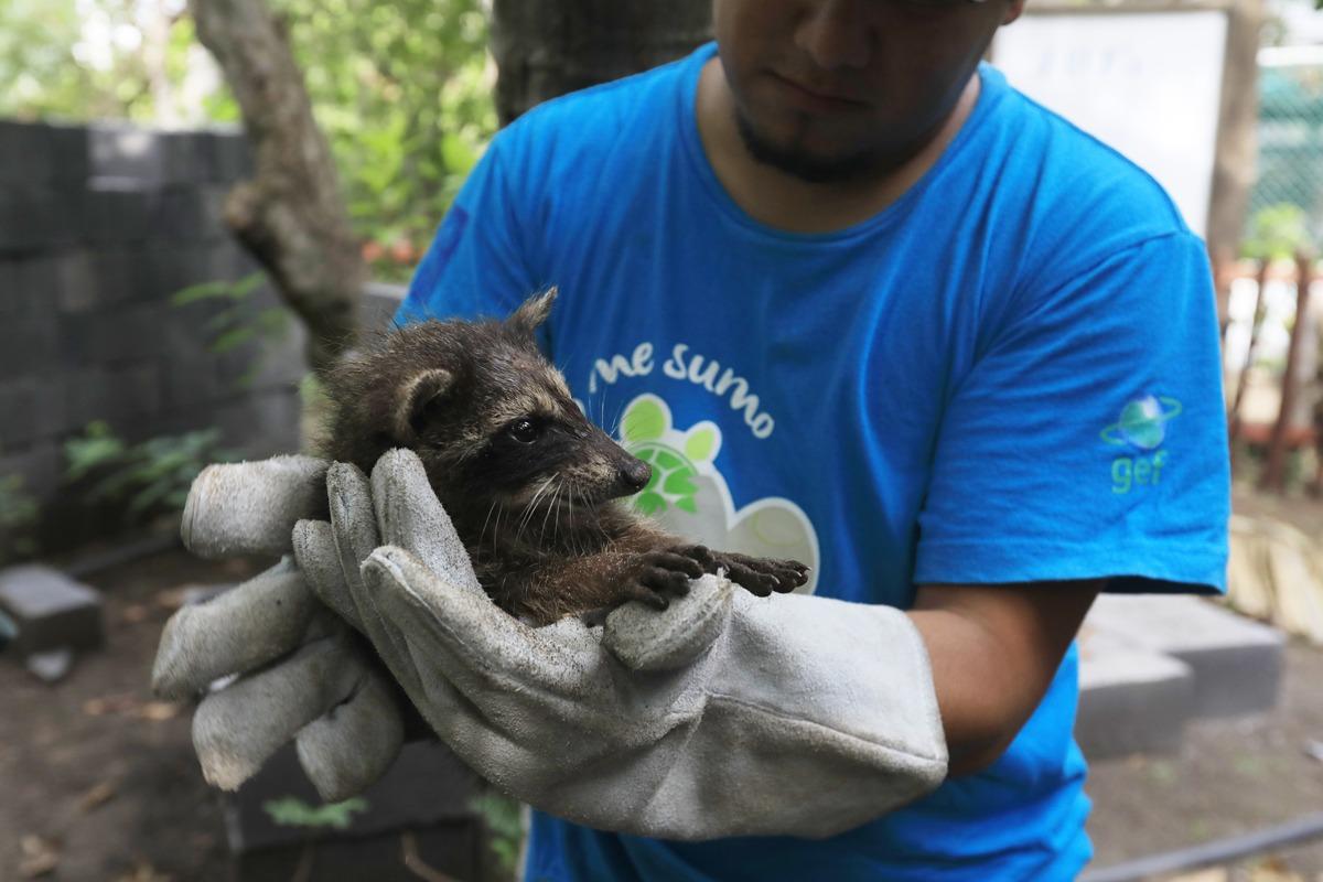 Educar para conservar las especies