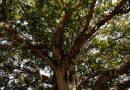 Cumplen metas de proyectos en bosques