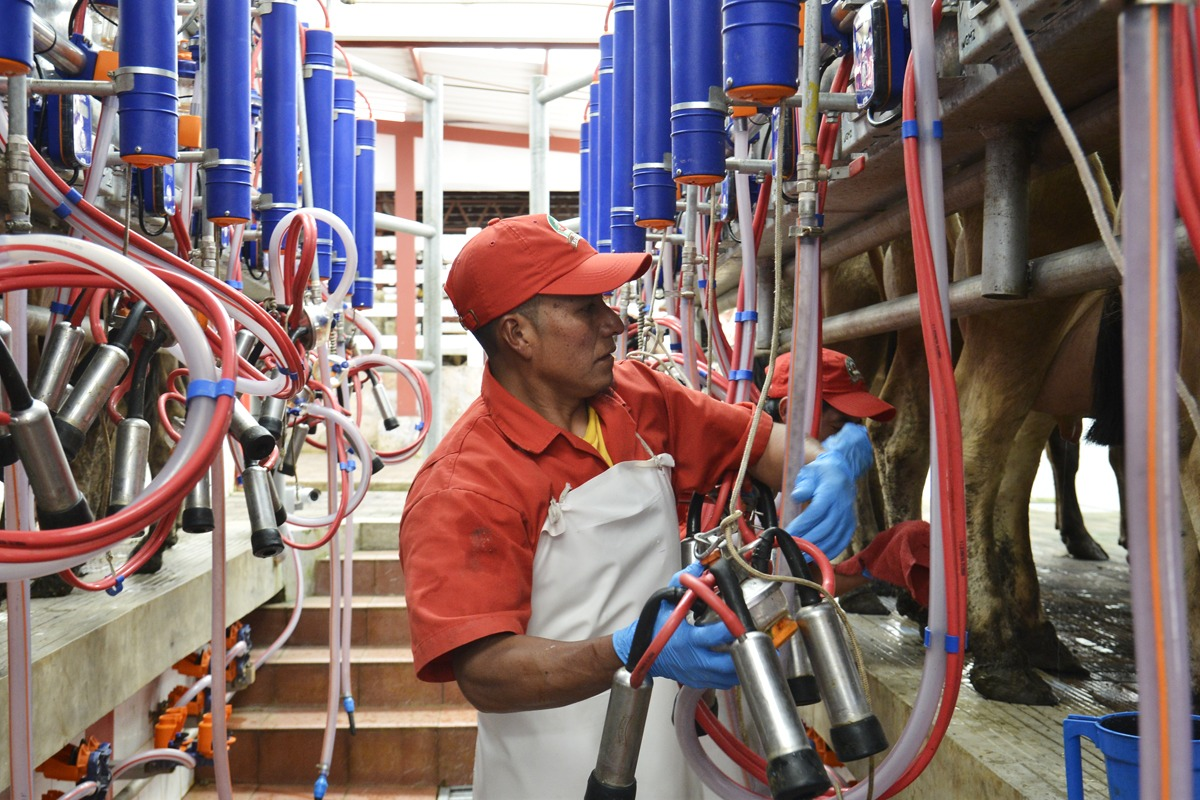 Industria láctea guatemalteca
